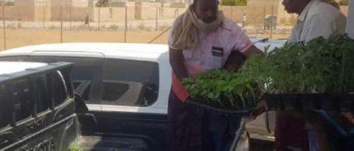 خليفة الإنسانية توزع 20 ألف شتلة زراعية بسقطرى