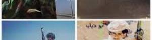 """بيان صادر عن الشيخ """"علي يسلم باعوضة"""" حول جريمة إغتيال أبناء صبيح باعوضه وبارحمة"""