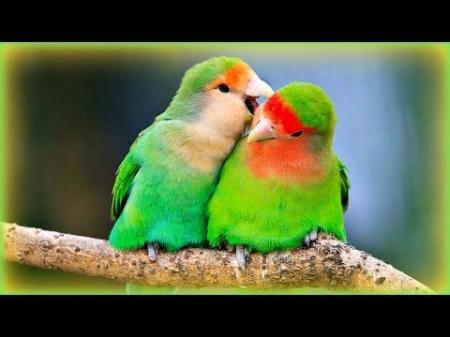الحب ما هو عيب يازين السياد : قصيدة للشاعرة منى بن عيدان